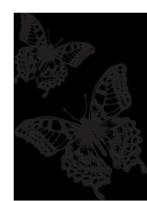 vacker store fjärilar butik